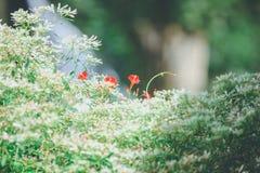 Röd blomma bland grönt naturligt Royaltyfri Foto