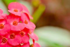 Röd blomma för blomning på oskarp bakgrund Arkivfoto
