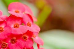 Röd blomma för blomning på oskarp bakgrund Arkivbild