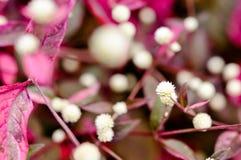 Röd blomma för blomning på oskarp bakgrund Arkivfoton