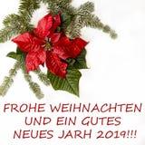 Röd blomma för julstjärna med granträdet och snö på vit bakgrund Hälsningsjulkort vykort christmastime Rött vitt och royaltyfria bilder
