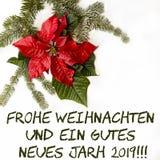 Röd blomma för julstjärna med granträdet och snö på vit bakgrund Hälsningsjulkort vykort christmastime Rött vitt och arkivbilder