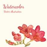 Röd blomma för vattenfärg som isoleras på vit bakgrund Royaltyfria Foton