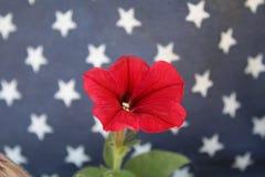 Röd blomma framme av Amerikas förenta staterflaggan Fotografering för Bildbyråer