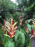Röd blomma & gräsplanblad Arkivfoton