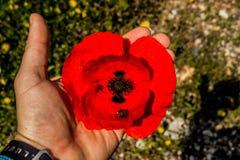 Röd blomma i hand Royaltyfri Bild