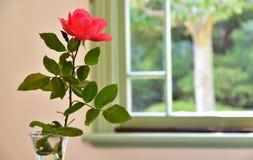 Röd blomma i rummet Arkivfoto