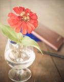 Röd blomma i vas på skrivbordet Royaltyfri Fotografi