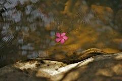 Röd blomma i vattenström Arkivfoto