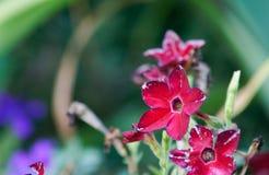 Röd blomma med bakgrund Royaltyfri Bild