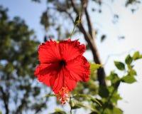 R?d blomma med suddig himmelbakgrund royaltyfri bild