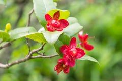 Röd blomma med suddighetsbakgrund arkivbilder