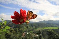 Röd blomma och en fjäril Arkivfoton
