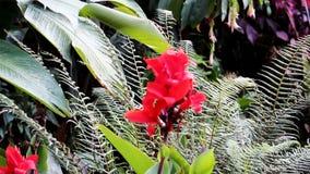 Röd blomma och gröna växter som flyttar sig med vind Peru South America stock video