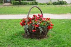 Röd blomma och stor blommakorg Loppfoto royaltyfria bilder