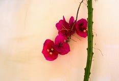 Röd blomma på en bakgrund av den gula väggen Royaltyfri Bild