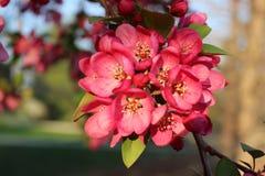 Röd blomma på en filial av trädet Royaltyfri Foto