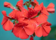 Röd blomma på en ljus solig dag arkivbilder