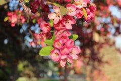 Röd blomma på ett träd Arkivfoton