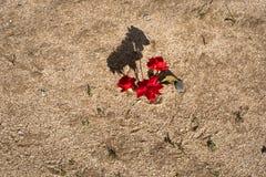 Röd blomma på gul sand royaltyfri bild