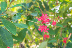 Röd blomma på träd Royaltyfria Foton