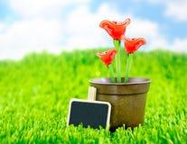 Röd blomma som göras av exponeringsglas i brun blomkruka och svart tavla på gr Arkivbild
