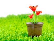 Röd blomma som göras av exponeringsglas i brun blomkruka på grönt gräs med Arkivfoton