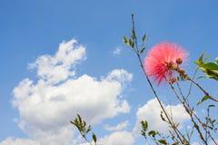 Röd blomma som lyfter in mot en blå himmel fotografering för bildbyråer
