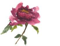 Röd blomma, vattenfärgmålning Arkivfoton