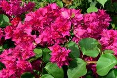 Röd blommabakgrund Arkivbild