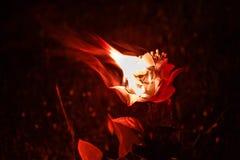 Röd blommabrännskada royaltyfria foton