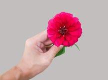 Röd blomning i en hand Royaltyfri Foto