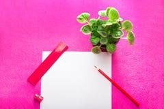 Röd blyertspenna med vässaren, linjal och inomhus växt och vitbokark på röd bakgrund Plan design brevpapper Fotografering för Bildbyråer