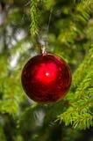 Röd boll för jul! Arkivbilder