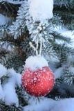 Röd boll för nytt år på levande gran-träd med frost och snö arkivfoto
