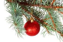 Röd boll på filialen av julgranen Arkivfoto
