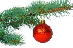 Röd boll på julgranen Royaltyfri Fotografi