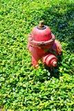Röd brandpost med i gräs arkivbild