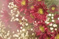 Röd bukett för New England aster royaltyfria foton