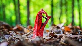Röd champinjon i skogen fotografering för bildbyråer