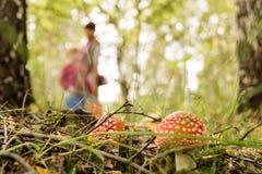 Röd champinjon i skogen arkivfoton