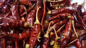 Röd chili Fotografering för Bildbyråer