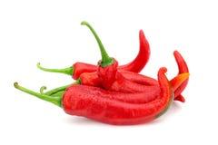 Röd chili Royaltyfria Foton