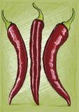 Röd Chili royaltyfri illustrationer