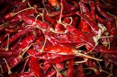 Röd Chili arkivbilder