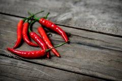 Röd chili Royaltyfri Bild