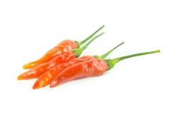 Röd chili på vitbakgrund Royaltyfri Foto