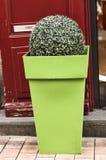 Röd dörr för grön blomkrukaannons Arkivfoto
