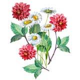 Röd dahlia för bukett och vita kamomillar av vattenfärgen Abstrakt blom- bakgrund stock illustrationer