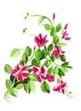 Röd dipladeniya Blom- botanisk blomma Lös isolerad vårbladvildblomma royaltyfria bilder